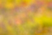 Fotografía desenfocada de un campo terroso de flores.